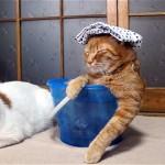 これは笑える!|お湯がないバケツの中で温泉気分を味わうオッサン猫
