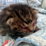 息絶え絶えの子猫を保護し愛情を注いだ結果、自信に満ちた姿に成長した子猫 15枚