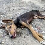 これは痛ましい!|最後の力を振り絞り必死に助けを求めて尻尾を振る犬の保護