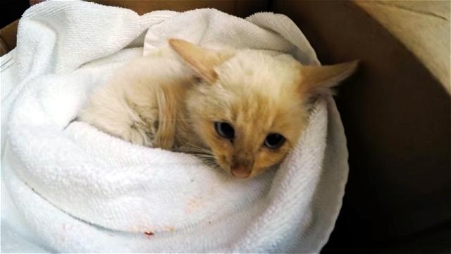 積雪の中で凍りついた息絶え絶えの子猫を発見、保護した結果…