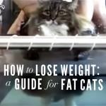 太った猫向けのダイエット方法。太ったニャンコはこうするにゃ~!(笑)