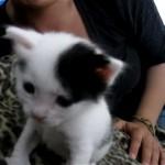 突然のくしゃみに困り顔をするおもしろカワイイ子猫♡