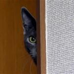 飼い主さんの行動を秘かに監視する可笑しな猫(笑)