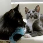 シェルターで保護された盲目の野良猫の目となり、面倒をみるシェルター生まれの子猫 8枚/動画