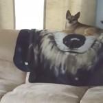 これは酷い!|ソファーの上で一身に注目を浴びるワンちゃんに訪れた突然の悲劇