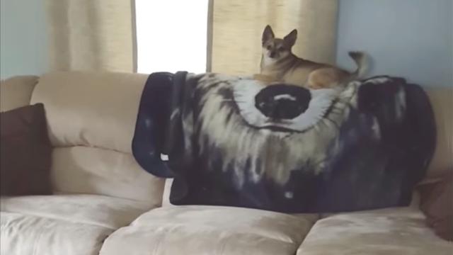 これは酷い! ソファーの上で一身に注目を浴びるワンちゃんに訪れた突然の悲劇