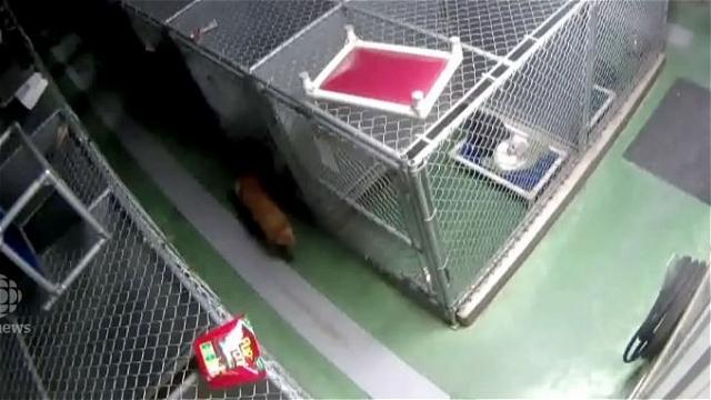 寂しそうに鳴き声をあげる子犬たちとその鳴き声を聞いた一匹の犬の心温まる出来事 5枚/動画