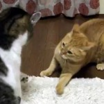 爆笑!|猫の戦い方があまりにも平和すぎて吹き出した!
