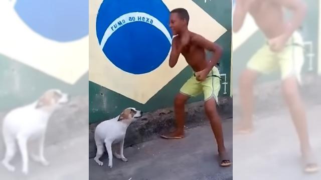 ブラジルのワンちゃんはサンバが大好き♪