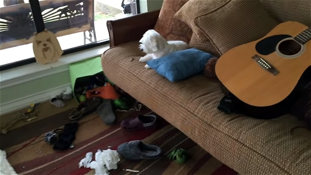 飼い主さんに部屋を散らかしたと誤解されているワンちゃん。その真相は…