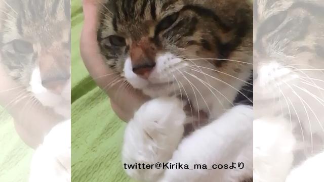 飼い主さんの腕に抱きついた猫。腕を動かしてみた結果、かわいい反応が…