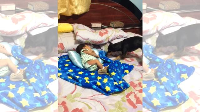 赤ちゃんに付き添っていたワンちゃん。赤ちゃんが眠るとこんな優しい行動に…♡