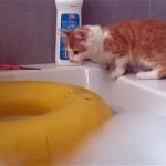 浮き輪の真ん中に飛び乗ろうとしてトラップにハマってしまったネコ