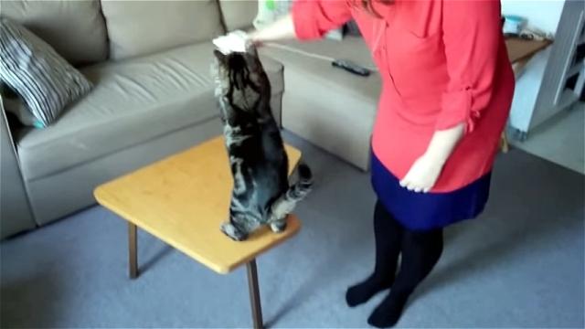 変わった水の飲み方をする猫。これがお気に入りなんだとか…