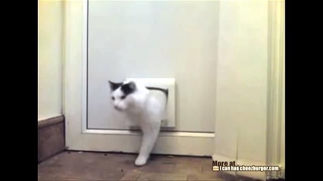 猫専用ドアを壊してしまったニャンコの謎めいた行動(笑)