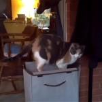 洗濯物入れの上に乗っていた猫に訪れた予期せぬ出来事(笑)