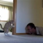 子猫を相手に隠れん坊をして子供のようにはしゃいでいる飼い主さん(笑)
