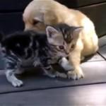 子猫と子犬は出会ってすぐに仲良しに…。2匹のほのぼのとする光景