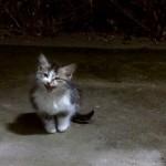 嵐の夜、助けを求めてやって来た迷子の子猫を保護した結果 15枚/動画