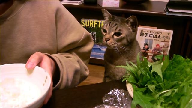 飼い主さんの箸の動きに目を奪われる焼き魚が大好きな猫