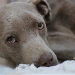 人におびえる捨て犬の信頼を取り戻すために獣医師が取った心温まる行動