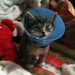 目に病を持つ子猫を拾って保護し、5カ月に渡る治療の結果 15枚