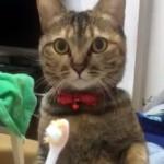 猫に歯ブラシを見せた結果、こうなりました!(笑)