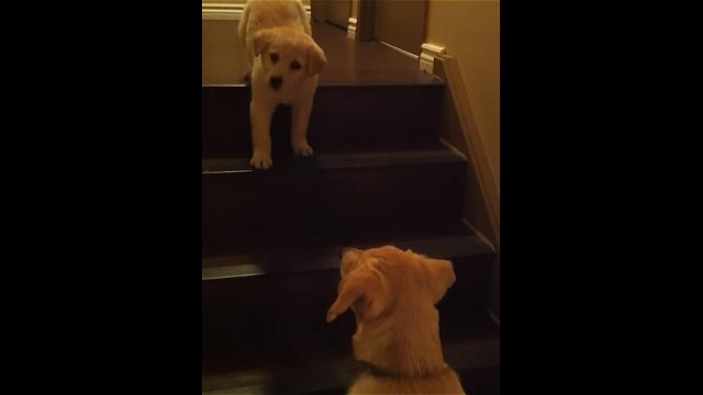 母親から階段の降り方を教わる子犬の微笑ましい光景