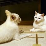 しつこくネコに話しかけるワンコをネコが無視し続けた結果