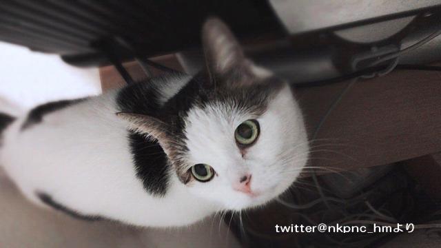 キャットタワーからゴミ箱の中へ落ちてしまった直後の猫の様子(ΦωΦ)