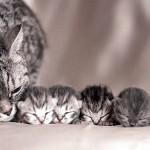 母猫と子猫のほのぼのとする写真集 20選