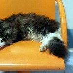 病院へやって来ては診察待ちをする患者さんの相手をしてくれる猫 5枚