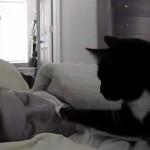 飼い主さんをソフトタッチでやさしく起こしてくれる猫♡