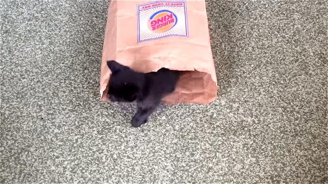 紙袋から続々と登場するかわいい子猫たちに思わずニッコリ♪