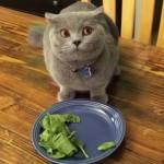 野菜が嫌いなニャンコ。野菜を食べたくないニャンコのとった行動が笑える