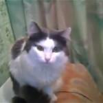バスルームに閉じこもる猫。猫にだって一人になりたいときもある