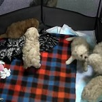 ケージに入れられていた子犬がいつの間にか外へ…。その脱出方法が意外だった!