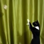 ロール紙の芯をフォースを使って引き寄せようとする猫