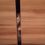 扉の小窓をカリカリする子猫のカワイイしぐさにホッコリ♪