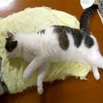 悪い夢でも見ているのか、眠りながら激しくダッシュする猫