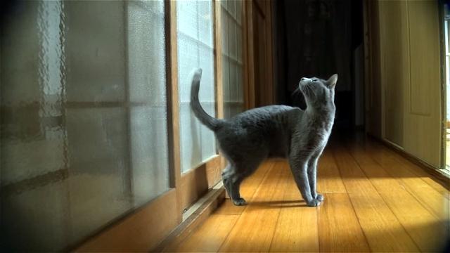 戸を開けて欲しい猫ちゃん。高速連続ノックで「あけにゃさい」をアピール!