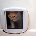 猫専用ドアから部屋に入ることが出来ずに四苦八苦する子猫