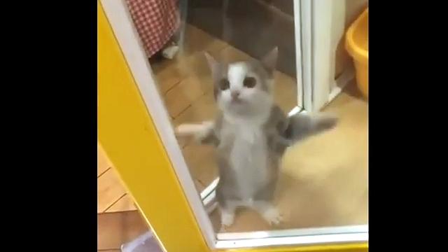 ピョンピョンと飛び跳ねる姿がめっちゃカワイイ子猫♪