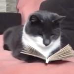 「にゃるほど」と熱心に本を読んでいるような仕草がおもしろいネコ♪