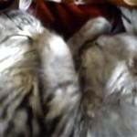 二匹並んで仲良くお昼寝…、と思いきや不思議な行動をする子猫(笑)