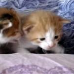 顔を見合わせておしゃべりをする二匹の子猫の愛くるしい表情にホッコリ♪