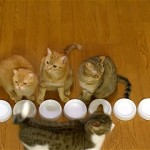 横一列にキレイに並んでご飯を食べる九匹の猫ちゃんにホッコリ♪