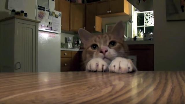 素早い動きでオヤツをゲットする猫、究極のワザを披露!