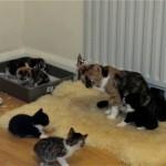 甘える子猫を威圧して退けるちょっぴりナーバスな母猫
