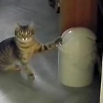 フタが回転するゴミ箱に戦いを挑み、攻撃がエスカレートするニャンコ(笑)